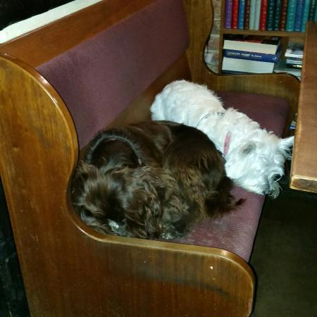 Horsham, UK: Rufus and with Bella from Chester-le Street 😊