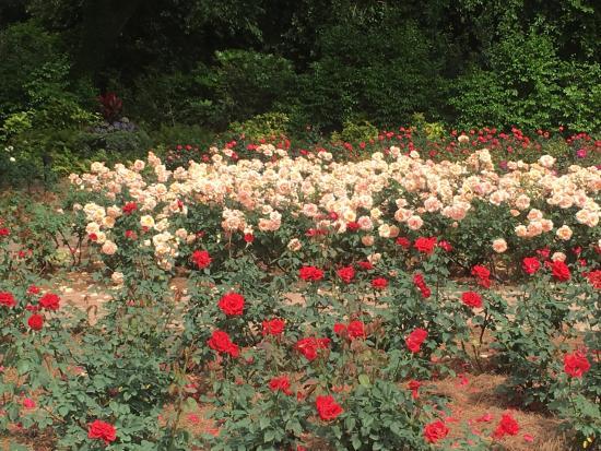 Theodore, อลาบาม่า: Part of the Rose Garden
