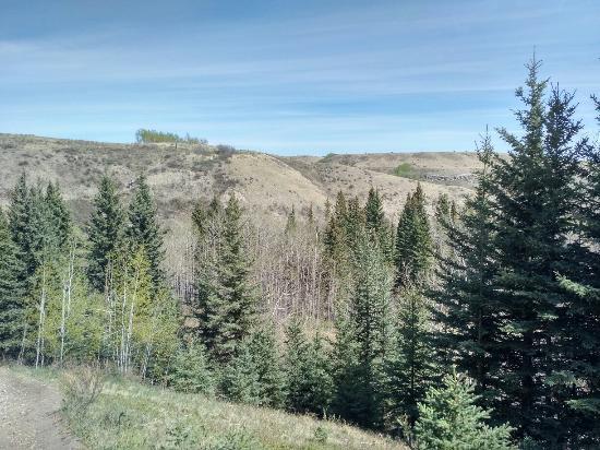 Cochrane, แคนาดา: Family friendly 2.3kms long at Big Hill Springs