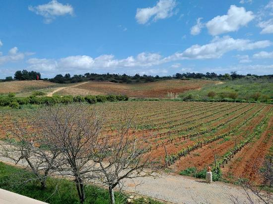 Estombar, Portugal: Hillside vineyards