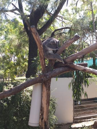 สวนพฤกษชาติและสวนสัตว์ร็อคแฮมป์ตัน: What a great day out....and for free! It is really a wonderful zoo