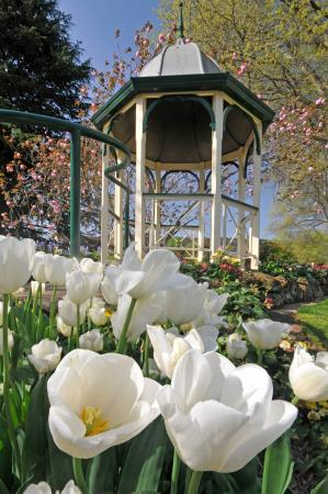 Tulip Time Annual Event in September in the Southern Highlands