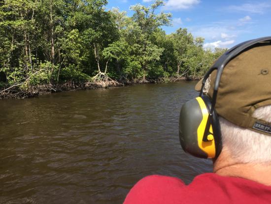 Everglades City, Floryda: Mangroves.