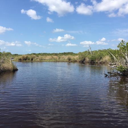 Everglades City, Floryda: Grasslands.