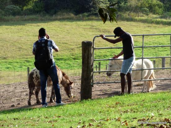 Tamborine, Australia: Farm animals in the location