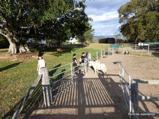 Tamborine, Australia: Farm