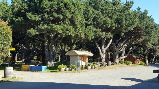 Manchester, CA: A beautiful KOA surrounded by big trees and very nice places to gather around, even for your fur