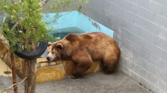 Cherokee Bear TORTURE Zoo