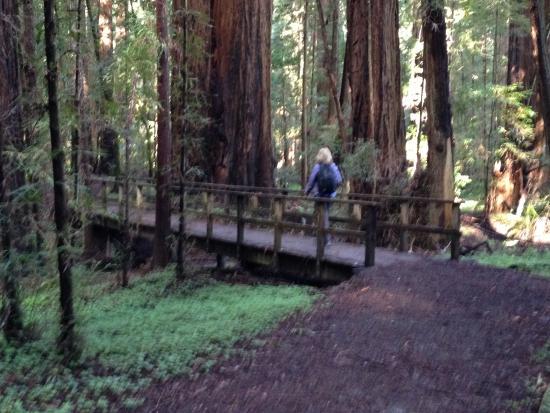 Boonville, Californie : Big Hendy Trail
