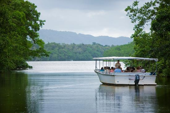 Down Under Tours - Day Tours : Informative cruise on the Daintree River