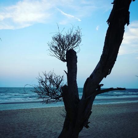 Springfield Beach Resort: หน้าหาด