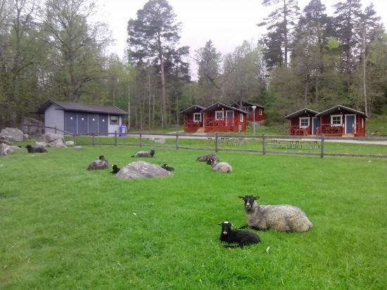 Uppsala, Sverige: Sheep and cottages