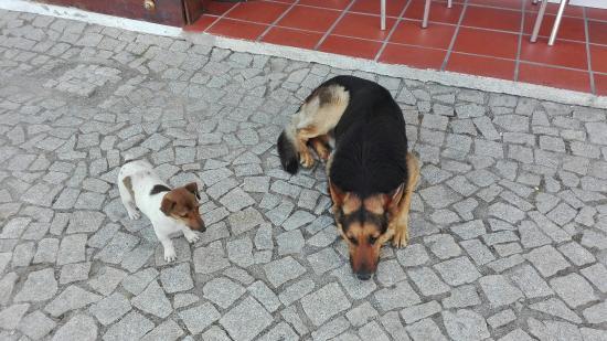 Viana do Alentejo, Portugal: IMG_20160427_191735_large.jpg