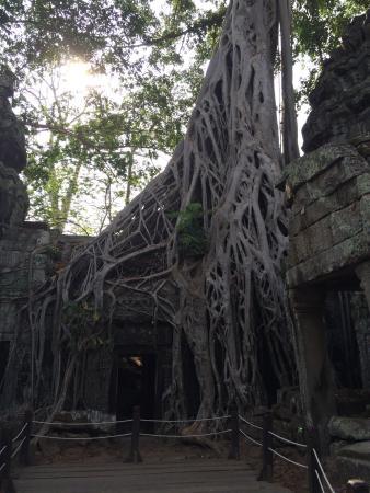 Angkor One Tour: photo7.jpg