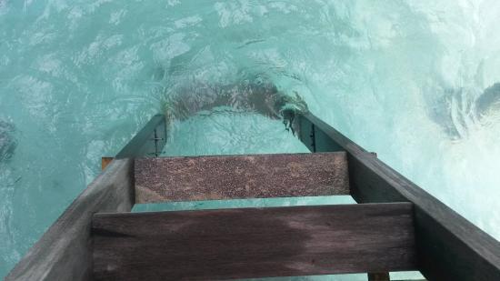Lankanfushi : broken steps on the bathroom ladder