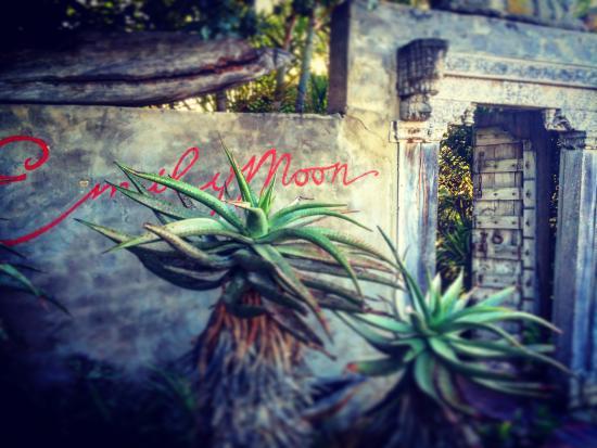 Emily Moon River Lodge-bild