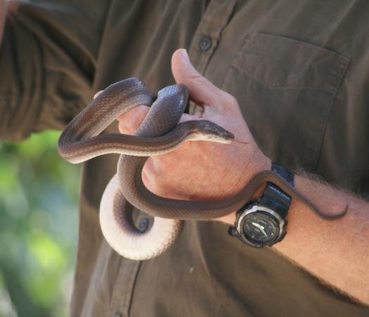 Southbroom, Republika Południowej Afryki: Howard the snake handler