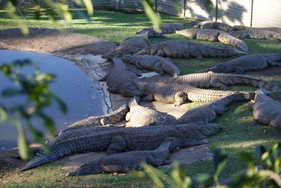Southbroom, Sydafrika: Crocs lazing