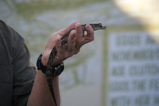 Southbroom, Republika Południowej Afryki: Holding a baby croc