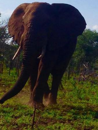 Lavumisa, Swaziland: Bull elephant