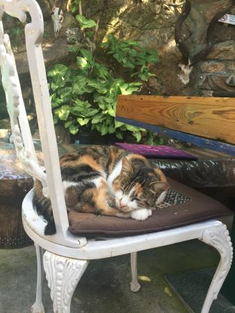Land's End Guest House: the sweetest kitty in town!