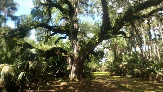 DeLand, FL: 20160423_114131_large.jpg