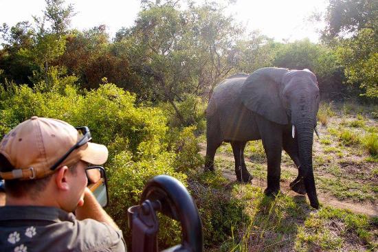 Leopard Hills Private Game Reserve, Afrika Selatan: photo4.jpg