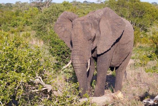 Leopard Hills Private Game Reserve, Afrika Selatan: photo7.jpg