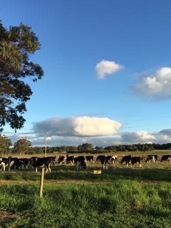 Cowaramup, أستراليا: photo4.jpg
