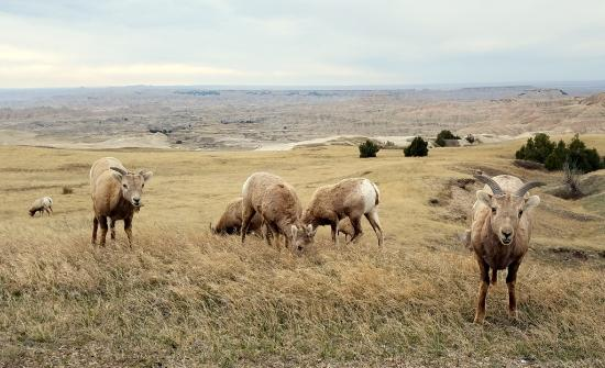 Hermosa, SD: Badlands National Park is nearby