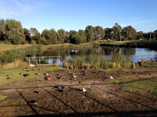 Clayton, Australia: Great man made wetland