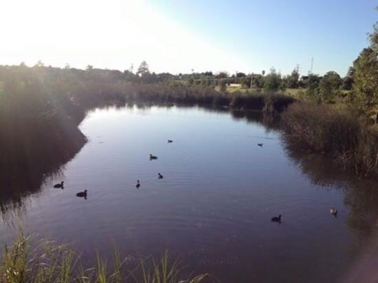 Clayton, Australia: Great bird watching spot
