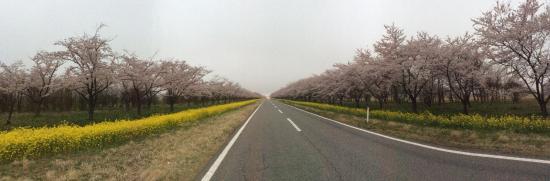 Ogata-mura, Japan: 菜の花ロード