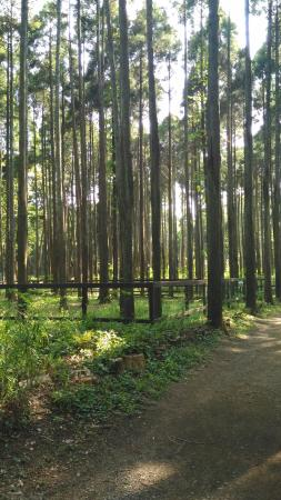 Showa no Mori Forest Village