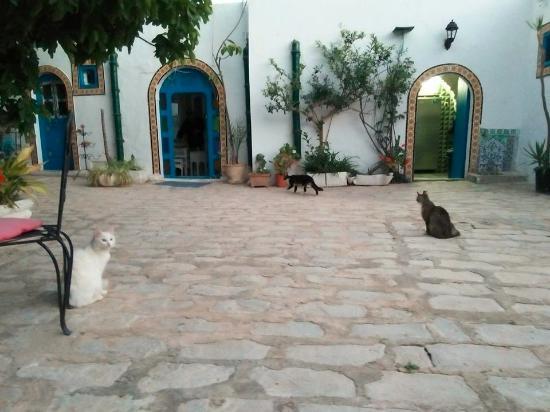 Hotel Bou Fares: the garden