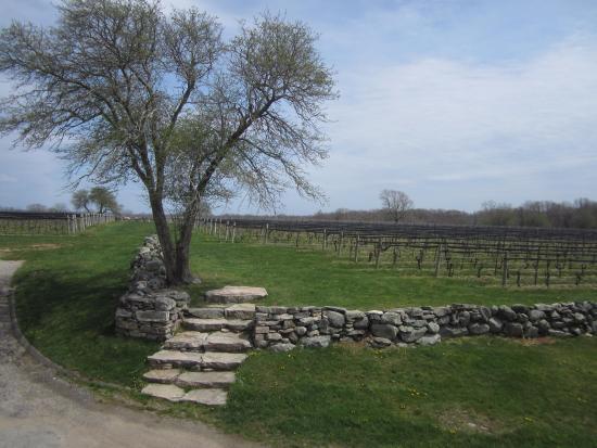 Βόρειο Στόνινγκτον, Κονέκτικατ: View of the vineyard