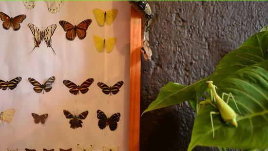 """Malinalco, Mexico: Museo vivo es una cápsula de conservación y un """"sentidero"""" de naturaleza"""