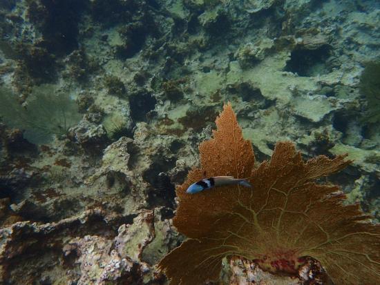 Oyster Pond, Saint-Martin / Sint Maarten: OI000012_large.jpg