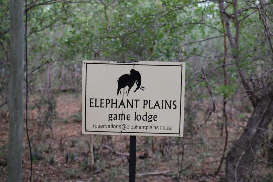 Elephant Plains Game Lodge: Here are a few pictures of the suite and some of the first animals we saw during our visit turns