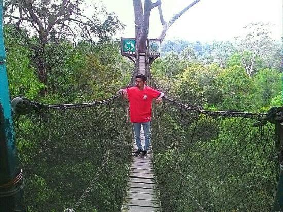 Wisata Alam Bukit Bangkirai Picture Of Bangkirai Hill