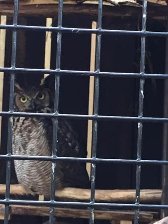 Denison Pequotsepos Nature Center Foto