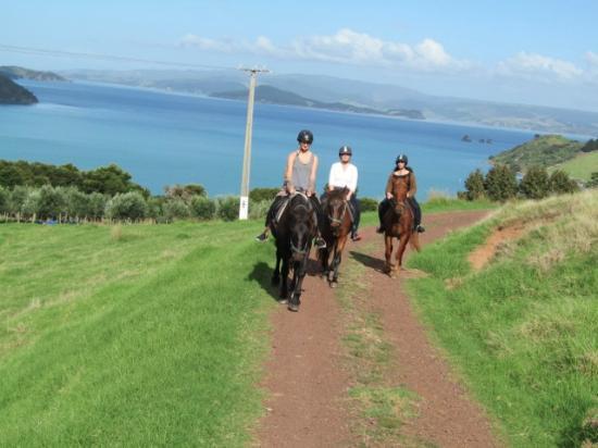 Isla Waiheke, Nueva Zelanda: Up we go!
