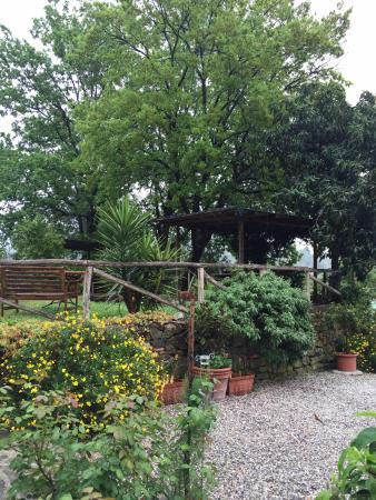 Colle di Buggiano, Italia: garden/pool area