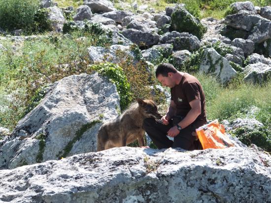 Zuheros, Espanha: José Luis et un des loups