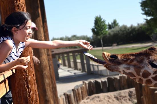 Litchfield Park, AZ:  Wildlife World Zoo, Aquarium & Safari Park PHX