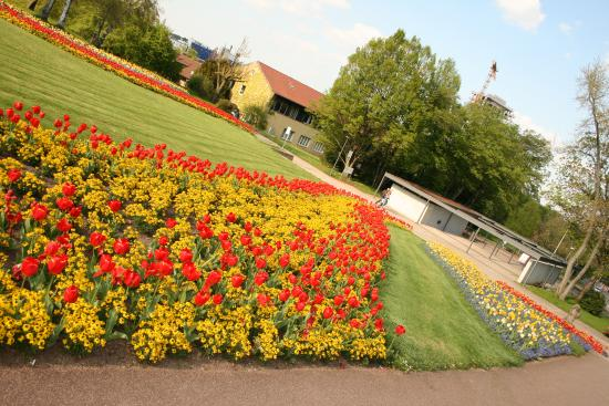 Wonderful Flowers In May Picture Of Killesberg Park Stuttgart