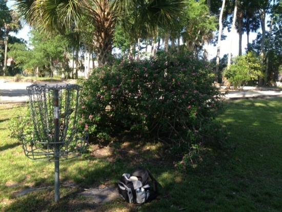 South Daytona, FL: Basket