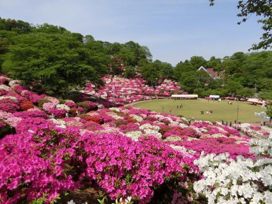Sabae, Ιαπωνία: ツツジのいい香りがします