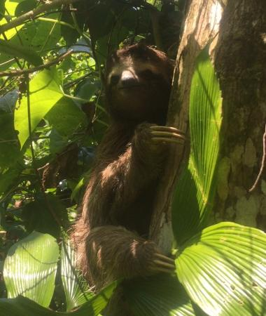 Cocles, Costa Rica: Sloth