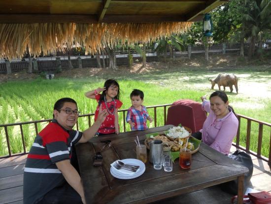 Laman Padi Langkawi: There's a buffalo behind us!